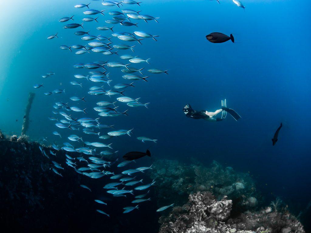 Freediving in Bali